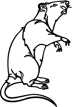 rok krysy